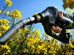 Из чего получают биотопливо