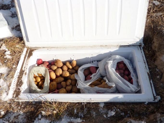 Виды традиционных погребов