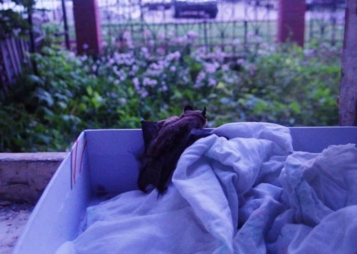 Как избавиться от летучих мышей в доме